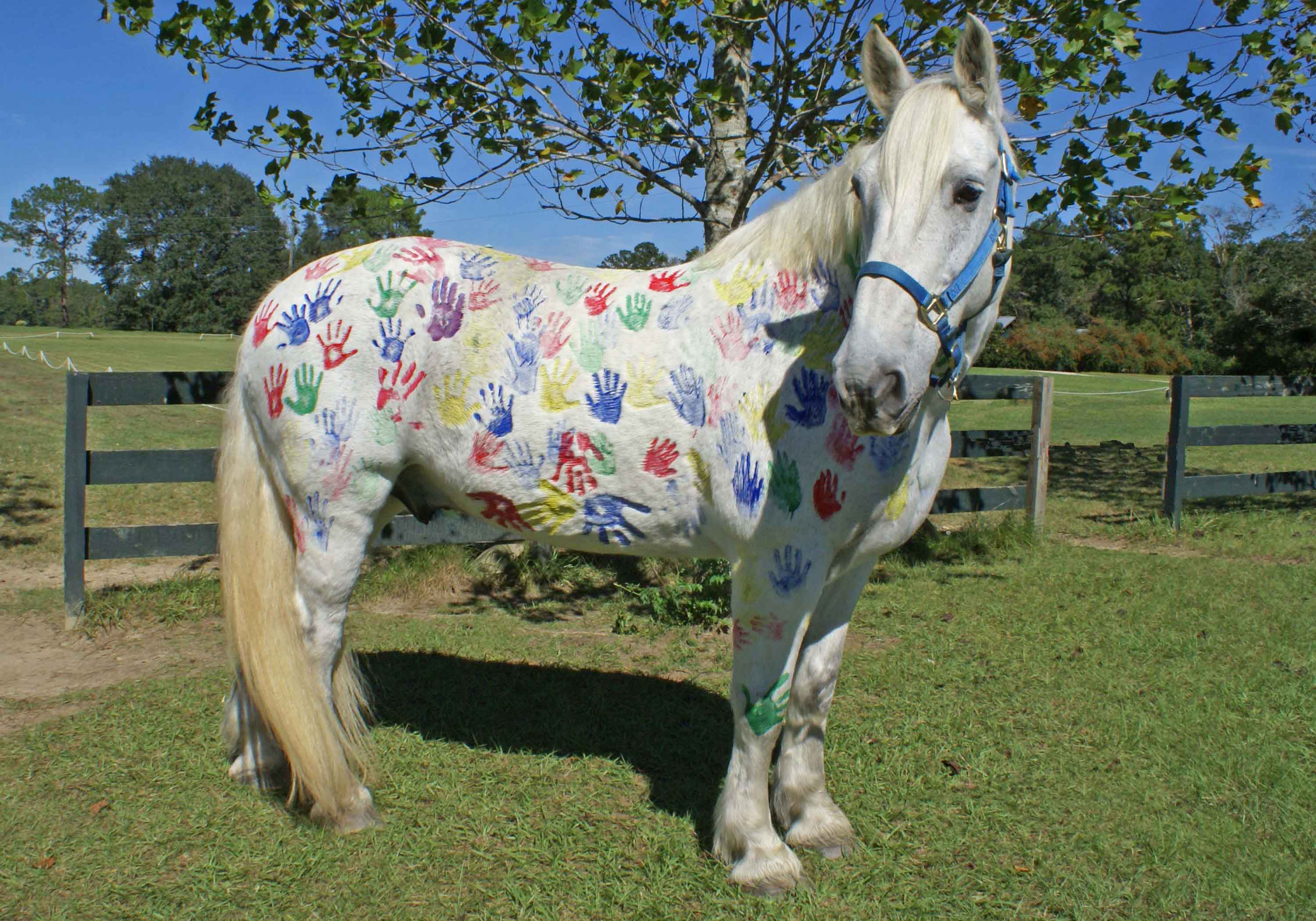 painted pony party